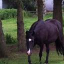 Profilbild von papu64