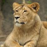 Profilbild von lwin