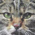 Profilbild von MeRi