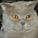 Profilbild von MinervusMaior