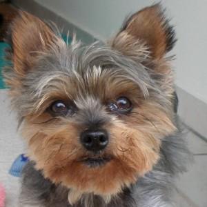 Profilbild von ivitho
