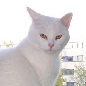 Profilbild von Catingrid