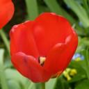 Profilbild von Purzelchen