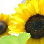 Profilbild von Sonne