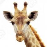 Profilbild von Fiona