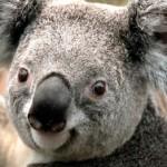 Profilbild von terry
