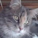 Profilbild von Awenwitch
