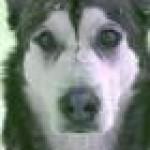 Profilbild von Knorpel
