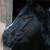 Profilbild von Amei