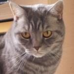Profilbild von Conny