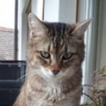 Profilbild von Matteone