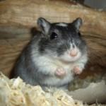 Profilbild von Rennmaus