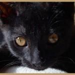 Profilbild von juliane