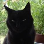 Profilbild von Spiridonna