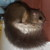 Profilbild von Emmamama