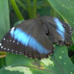 Profilbild von Schmetterling